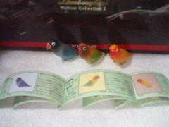 フルタ ペット動物2  キエリクロボタンインコ  ヤマブキ ブルー  ルチーノ 3種