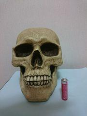 大迫力! 実物大のスカル 頭蓋骨の貯金箱