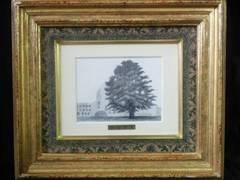 絵画 銅版画 藤田吉香『イチョウの木』真作保証