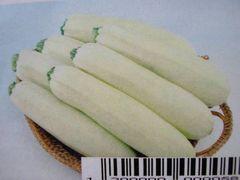 珍しい 白ズッキーニ 12粒