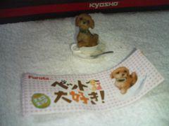 フルタ  ペット大好き犬 Tカップ  トイプードル シークレット