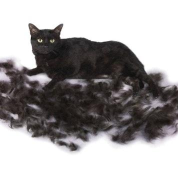 ファーミネーター 小型猫 S 短毛種用