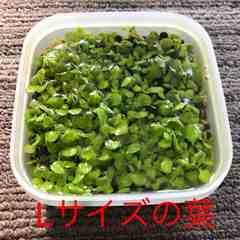 水草の種《10g》プレミアムシード同等品 Lサイズ