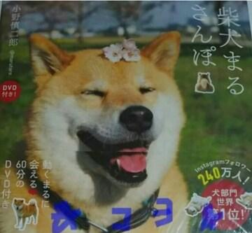 柴犬まる さんぽ DVD付き! 本 写真集 初版 KADOKAWA 中古