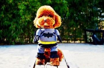 ペット服バットマン
