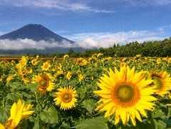 世界遺産 富士山 写真 A4又は2L版 額付き