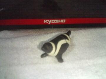 フルタ  日本の動物1                     クラカケアザラシ