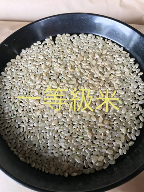 渡部家の新米純こしひかり 25�s  玄米 特別栽培 < グルメ/ドリンクの